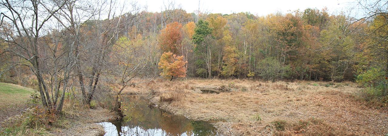 Beaver Dam Creek Battlefield Hero