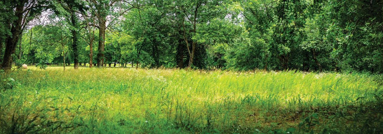 Cabin Creek Battlefield by Noel Benadom