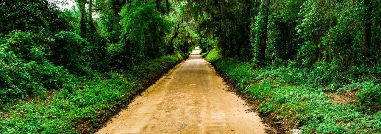 Eutaw-Springs-Dirt-Road-Ryan-Montgomery.jpg