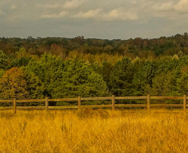 Field, fence and woods in a scene from the Liberty Trail S.C.