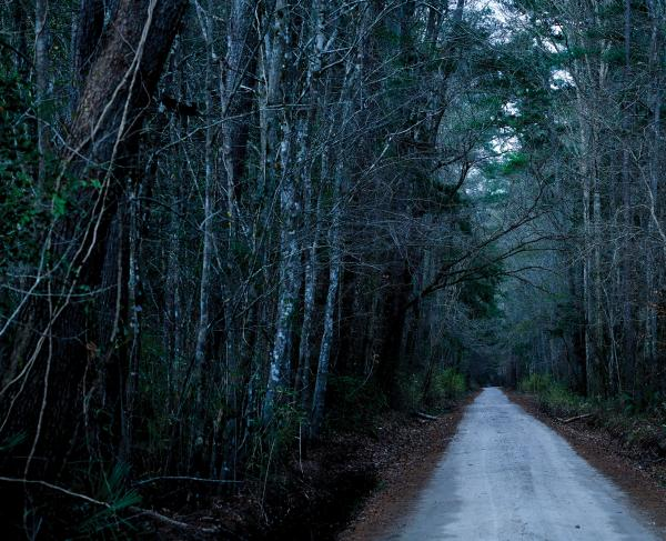 A straight dirt road runs through cold, dark woods.