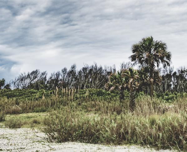 Morris Island Landscape