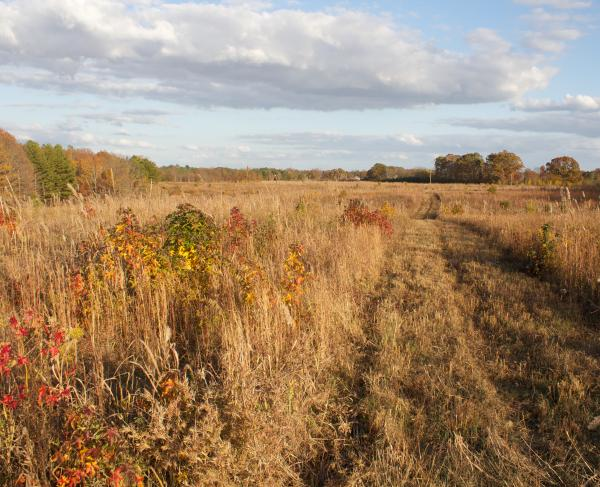 Fallen Timbers - Forrest's View