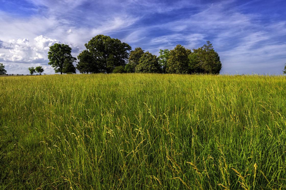 Appomattox - Field