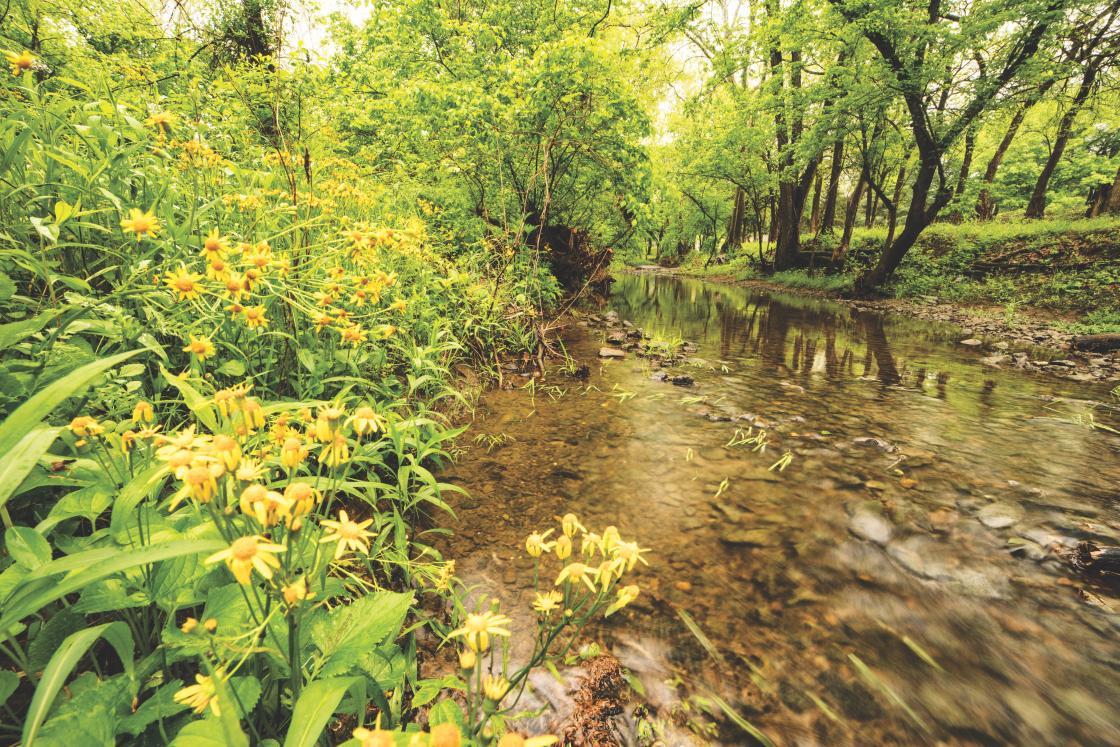 Flowers at Cedar Creek