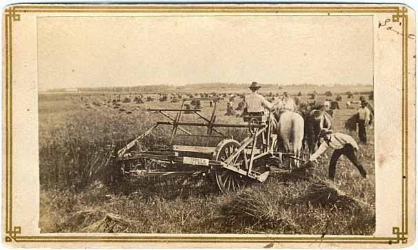 Image 3.3 harvesting wheat.jpg