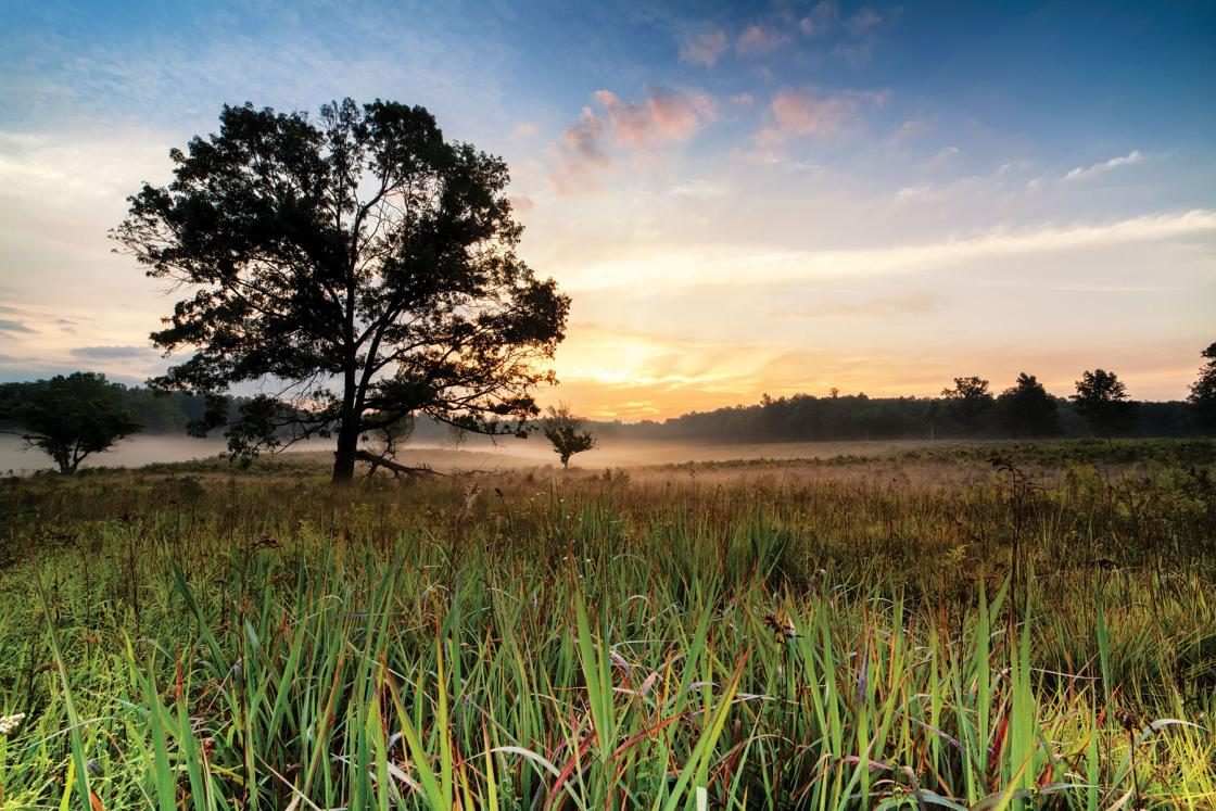 Spotsylvania Battlefield with Grass and Fog