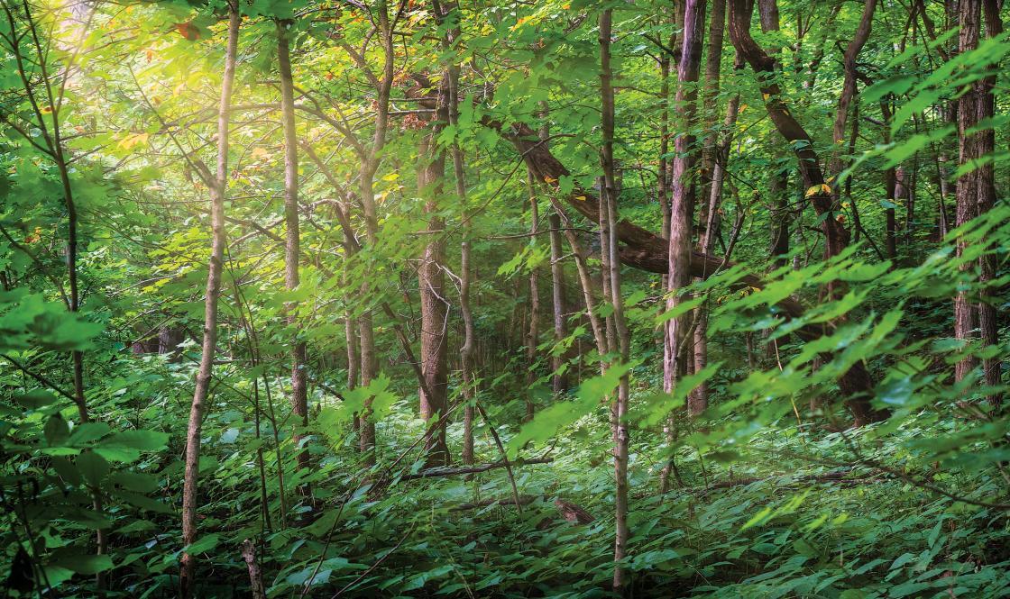 Tippecanoe Battlefield Vegetation