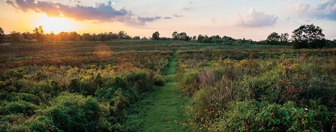 Save Perryville and Stones River Landscape Square