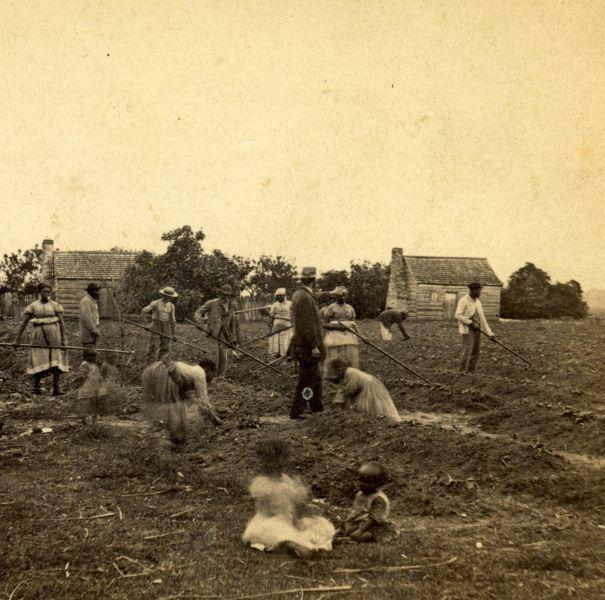 slavery field scene 605x600