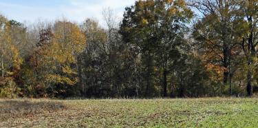 Upper Field 700px